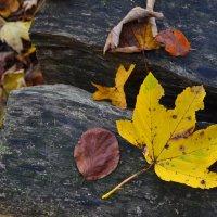 осень как она есть :: Marina Teso T.