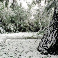 Осенний  снег. :: Анатолий 2015 Трепышко
