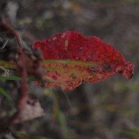 Осенний лист :: Pavel Lomakin