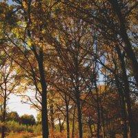 Снова осень мне приносит золотистых красок яркий узор... :: Павел Зюзин