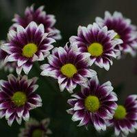 Цветы на память... :: Александр Попов