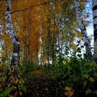 очей очарование... :: Арина Минеева