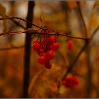 Осенняя зарисовка :: Владимир Холодный