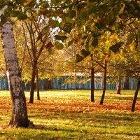 Осенний парк :: НАТАЛИ natali-t8