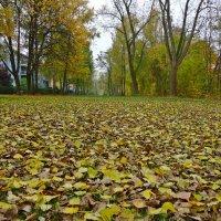 Чтоб крошка земля без хлопот зимовала, Ей осень лоскутное шьет одеяло.... :: Galina Dzubina