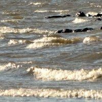 Волна,бегущая на камень.. :: Владимир Гилясев