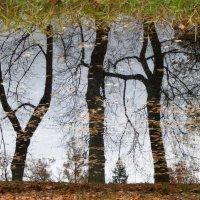 осень в отражении.. :: Марина Харченкова