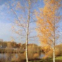 Великие Луки, осень... :: Владимир Павлов