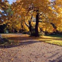 Осень в октябре :: ирина Пронина