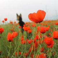 Собачьи мечты :: Ольга Shanti