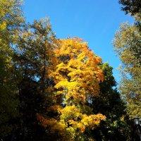 осень во Владимире :: людмила дзюба