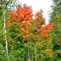 Осень :: Константин Симонов