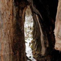 Дерево :: Дмитрий Арсеньев