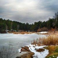лесное озеро :: Натали Акшинцева