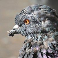 Серьёзный птиц :: Tanya Sukhomlinova