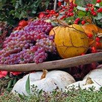 Осенний :: Наталья Джикидзе (Берёзина)