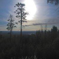 Утро в Якутской тайге. :: cfysx