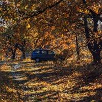 Осенние лесные дороги :: Ирина Приходько