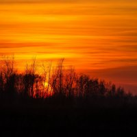 спряталось солнце,в чаще лесной... :: Алексей -