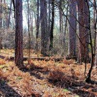 В последних числах октября... :: Лесо-Вед (Баранов)