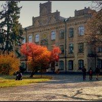 Осенью в кампусе :: oleg voltihaus