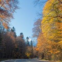 Дорога в Домбай ... :: Vadim77755 Коркин