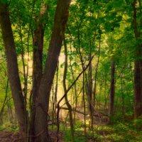 Лес кленовый... :: Roman Lunin