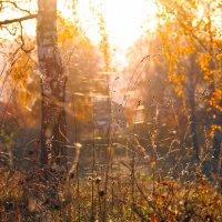 Здравствуй, Осень, рыжая подружка!.. :: Марина Юдинских