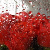 Брызги роз... :: LORRA ***