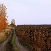 Два  цвета осени...... :: Валерия  Полещикова