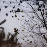 Осенний  сон :: Валерия  Полещикова