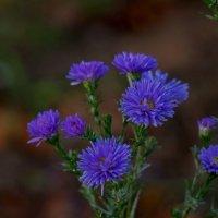 Позднее цветение :: Валентина Папилова