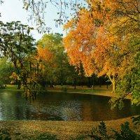 Озеро в парке :: Alexander