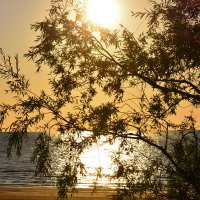 закат и море :: linnud