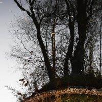 Осеннее :: Виктор Никитенко