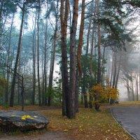 Утро в парке :: Svetlana Kravchenko