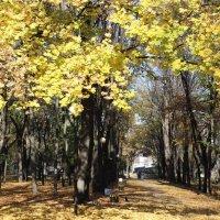 Осень :: Ольга М