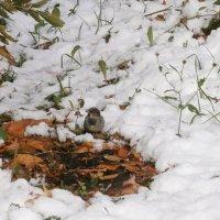 Первый снег :: Евгения Куприянова