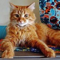 Мой кот ( Забияка)) :: Елена Федотова