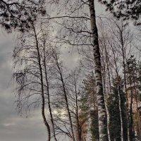 Даниковское озеро **** :: Валерий Талашов