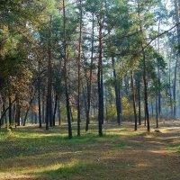 """Осень в парке """"Партизанской славы"""" Фото №2 :: Владимир Бровко"""