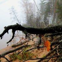 Туман :: Андрей Соловьёв