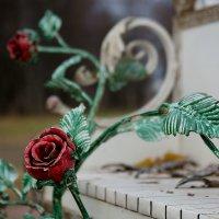 Роза :: Эдуард Монахов