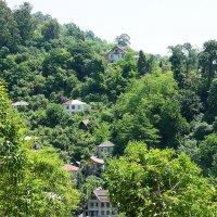 Вид с горы Трапеция, на которой расположен обезьяний питомник :: Елена Павлова (Смолова)