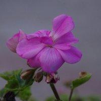 осень и цветы :: İsmail Arda arda
