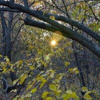Луч  солнца в лесной чаще :: Александр