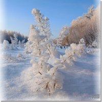 танцующий снег... :: Юрий Ефимов