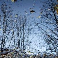 осень в луже :: павел