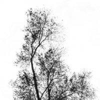 Дерево :: Dmitriy Predybailo