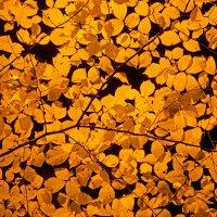 Золотая осень :: Геннадий Катышев